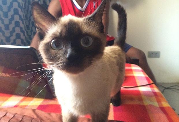 phillines_cat01